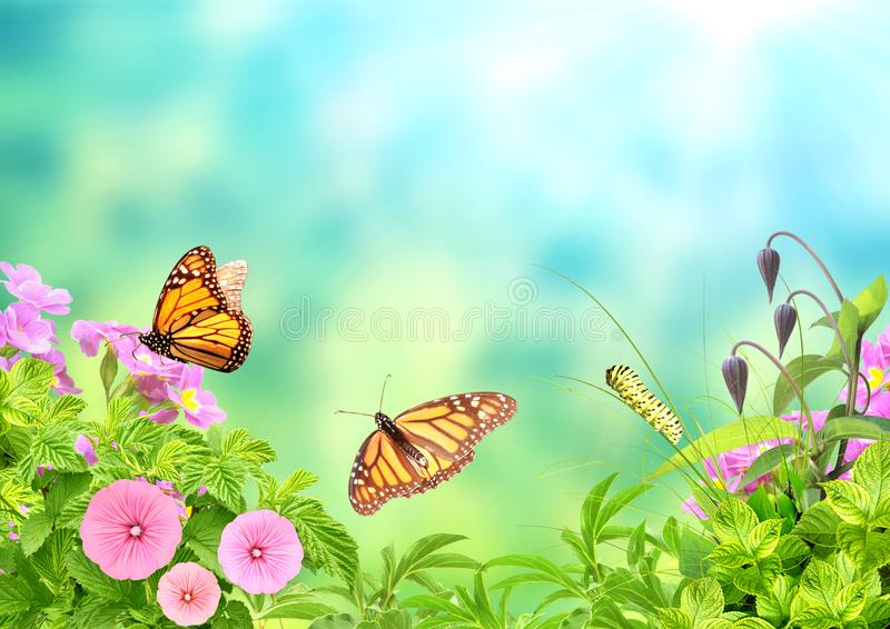 Summer frame with green leaves, flowers, caterpillar and butterflies stock image