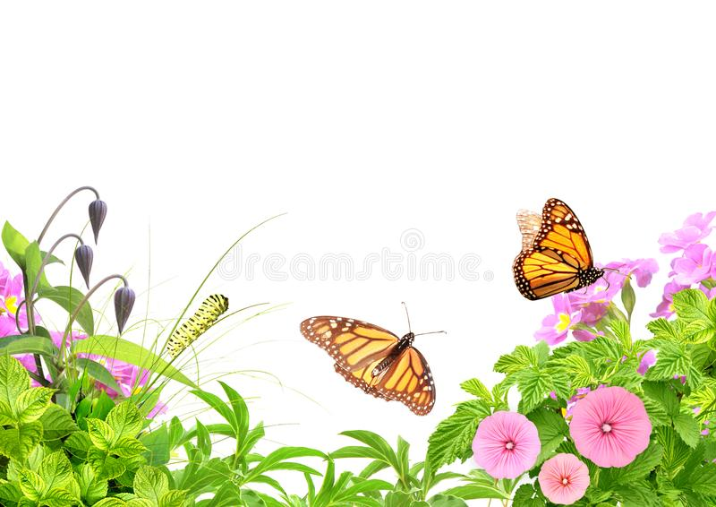 Summer frame with green leaves, flowers, caterpillar and butterflies stock photos