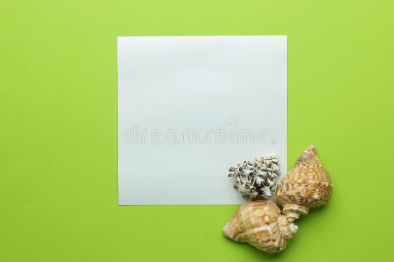 Summer frame. Paper frame for your text and seashells on a bright green background. top view stock images