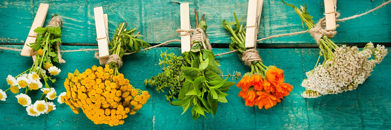 Summer fresh medicinal herbs on the wooden background. stock images