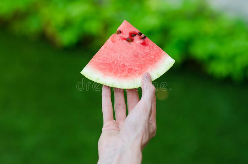Summer and fresh watermelon theme: a man holds a slice of watermelon on a green background. Studio stock photo