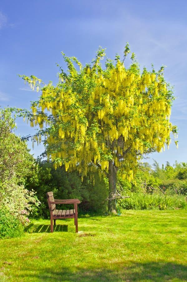 Free Summer Garden Stock Photos - 15447883