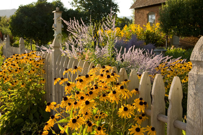 Summer Garden and Country Cottage. Black-eyed Susans and other flowers fill the garden in front of a country cottage with a picket fence royalty free stock photos