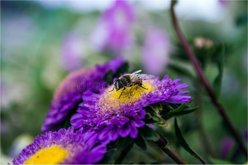 Hard-working bee stock image