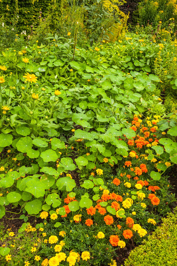 Summer garden royalty free stock photos