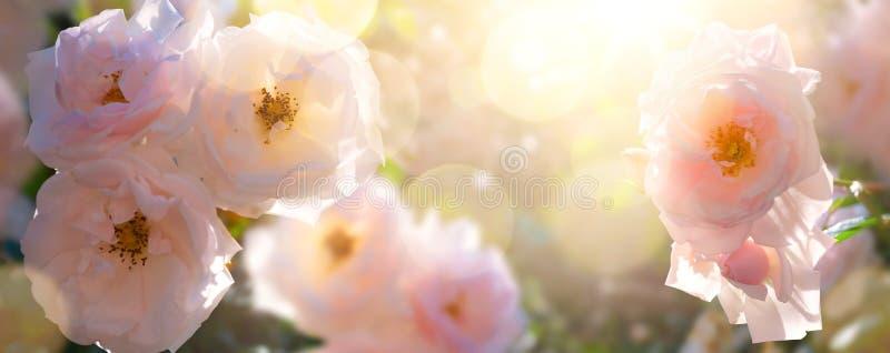 Art Summer garden landscape; beautiful summer flower against sunny sky; nature landscape background. Garden flower stock photos