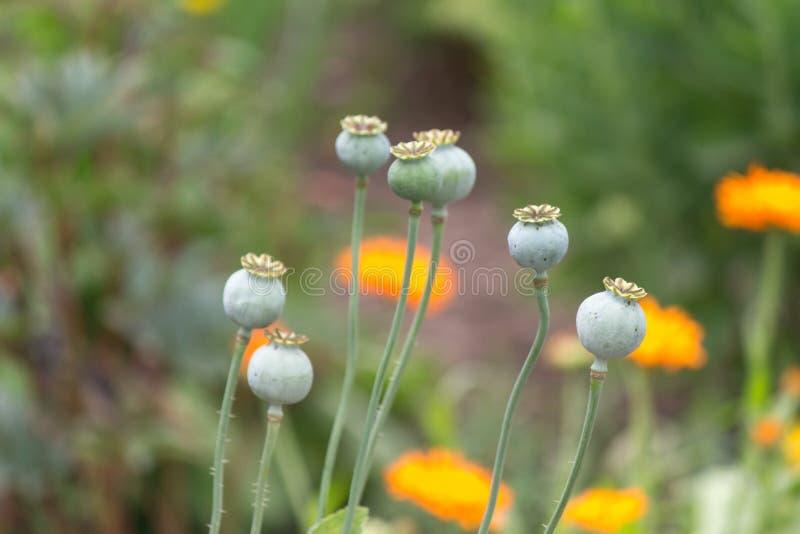 Summer in the garden stock photo