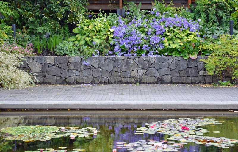Summer garden patio pond. With clematis and hosta plants stock images