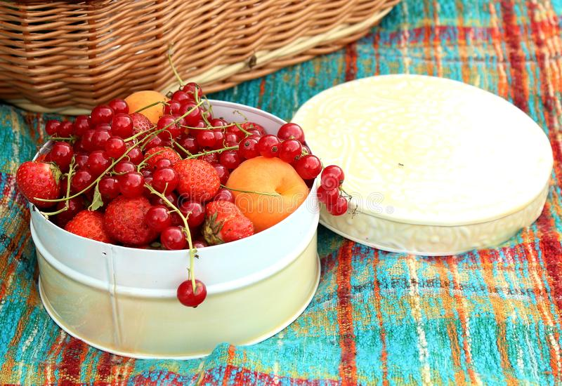 Summer in the garden - picnic - white box full of red berries currants and strawberries. Healthy diet - fresh fruit picked up from a garden, full of vitamines stock image