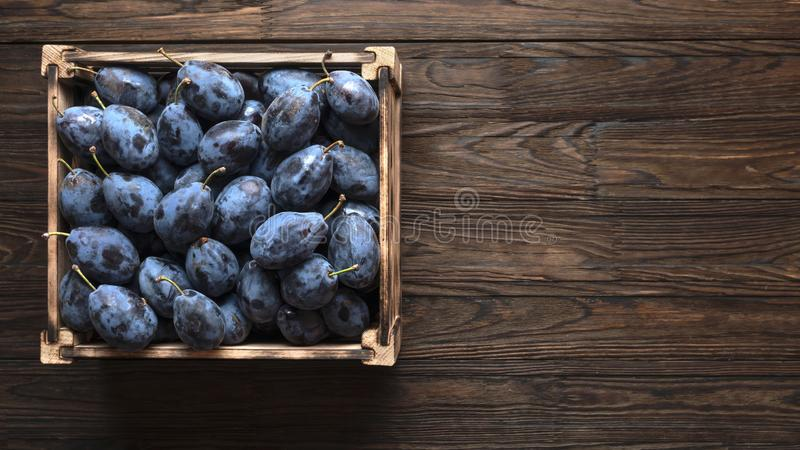 Summer garden,  ripe fruit, purple plums, seasonal harvest, harvest crop, wooden table, apricots, plums prunus, white background. Close up of ripe plums in a royalty free stock photography