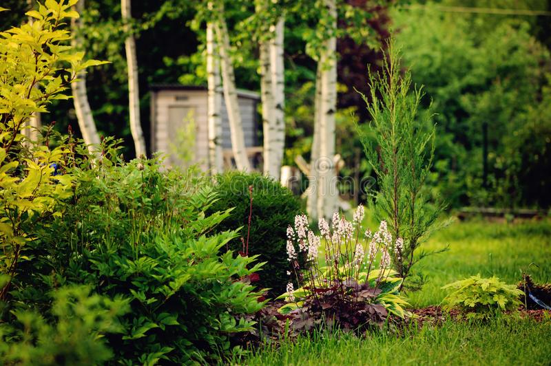 Summer garden view with conifers, perennial and birch trees. On background royalty free stock photo