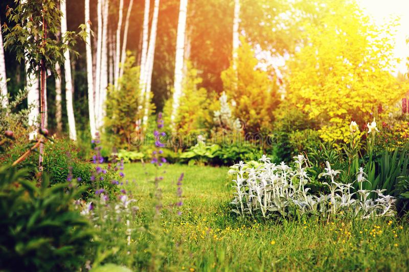 Summer garden view with forest on background. Country living far away from city royalty free stock photos
