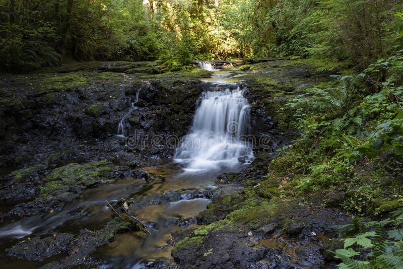 Summer at Gnat Creek royalty free stock image