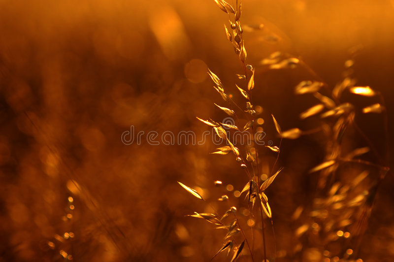 Download Summer Gold stock image. Image of season, gold, glorious - 1387357