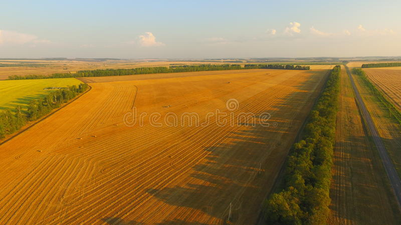 Summer. Gold field royalty free stock photo