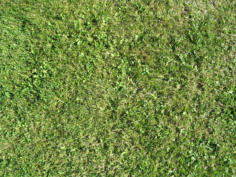 Summer Grass stock image
