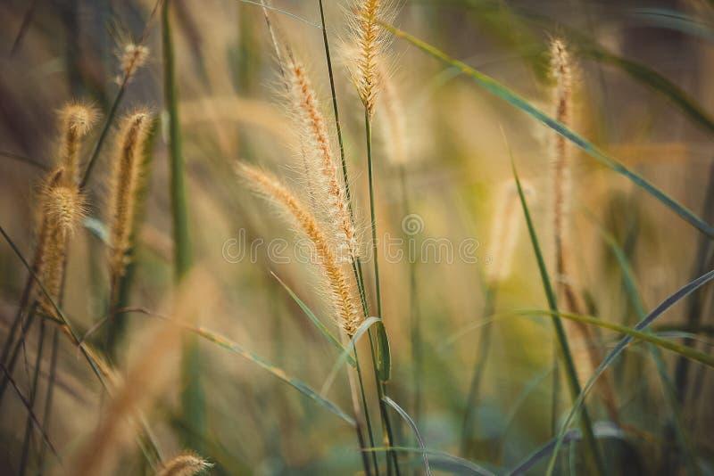Free Public Domain CC0 Image  Summer Grass Picture. Image  84935348 7da62e49e9