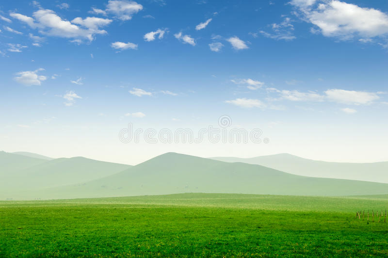 Summer grass field. And sunlight in blue sky stock images