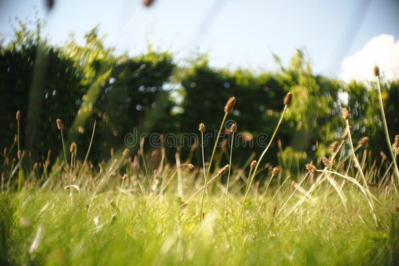 Summer Grass. Land with blue sky. Cine feeling. SOOC JPG stock photos