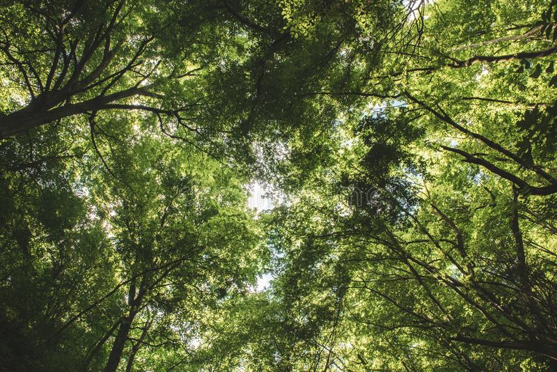 Summer Green Forest Stock Image. Image Of Light, Bright