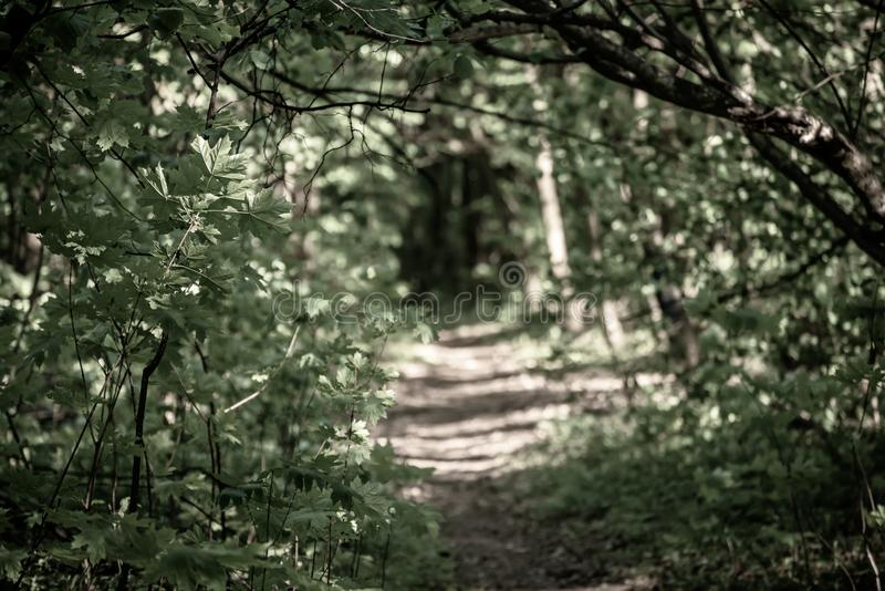 Summer Green Forest Stock Photo. Image Of Leaf, Beauty