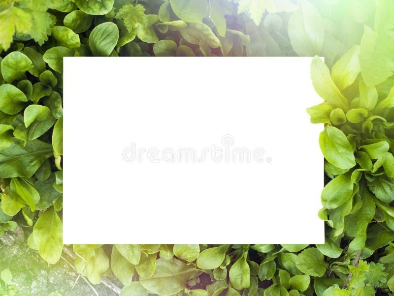 Summer green frame of grass stock image