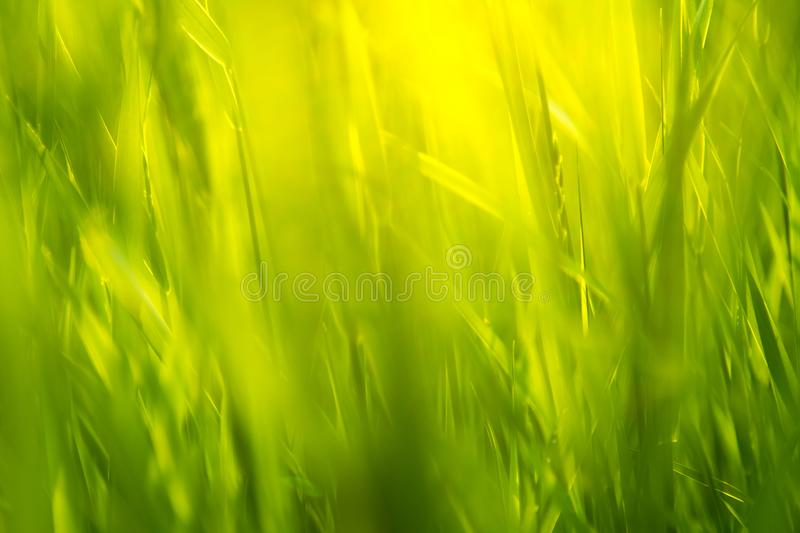 Green grass in sunlight 2 stock images