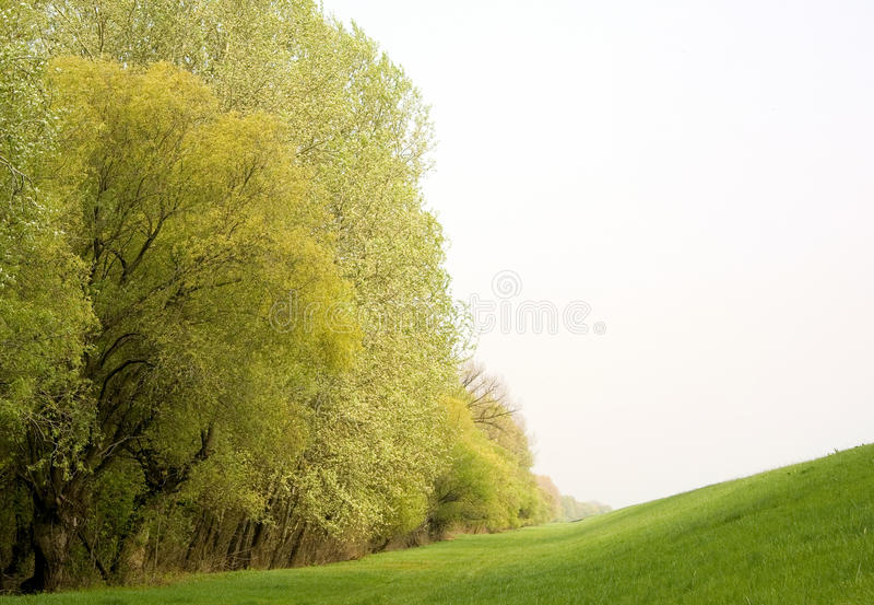 Summer green landscape stock images