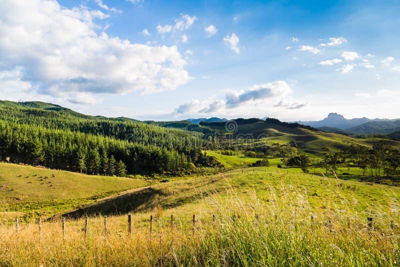 Download Summer Green New Zealand Landscape Stock Image - Image of grass, sunset: 39510307