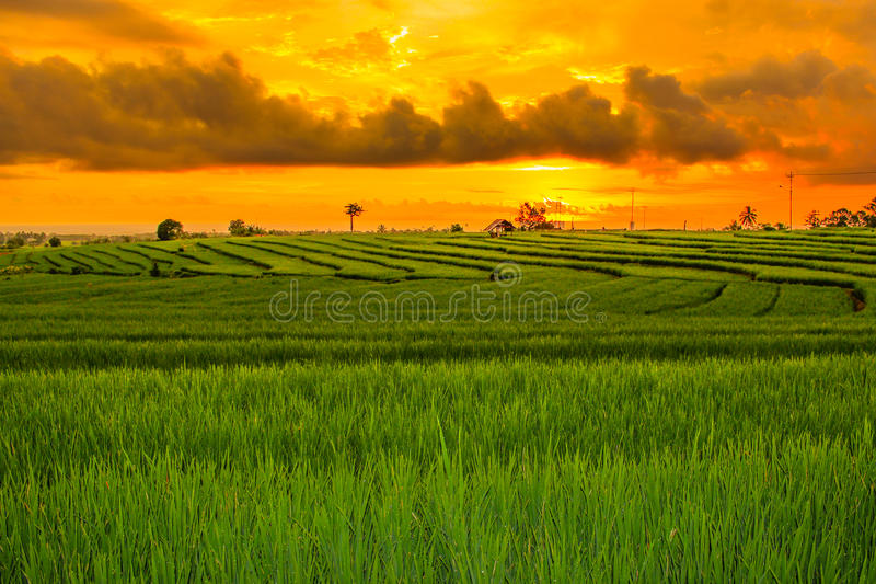 Summer green orange long see field. Sunset with summer season on muntain range, super clear field green on fields with no people activity stock photo