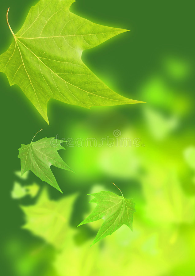 Summer Greens. Drifting leafs in summer time royalty free stock photography