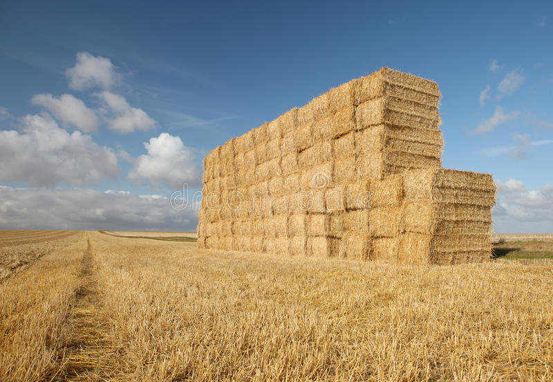 Summer Harvest Haystack Field royalty free stock images