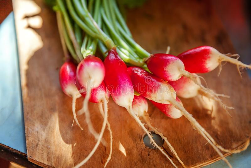 Large bunch of raw fresh juicy garden radish on wooden board. Summer harvested red radish. Growing organic vegetables. Large bunch of raw fresh juicy garden stock photos