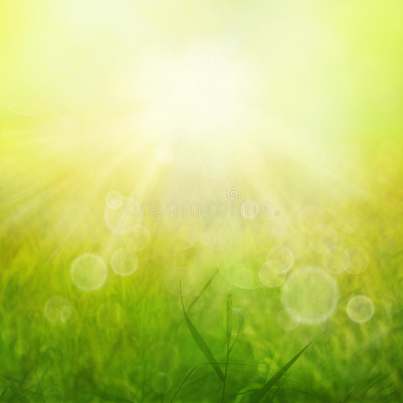 Download Summer heat stock image. Image of grass, herbs, blur - 20653621