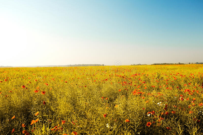 Download Summer heat stock image. Image of rural, vast, plant, field - 9975203