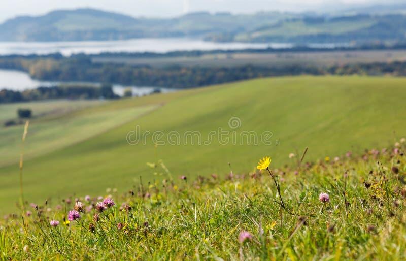 Summer hills wildflowers close to Liptovska Mara lake, Slovakia. royalty free stock photo