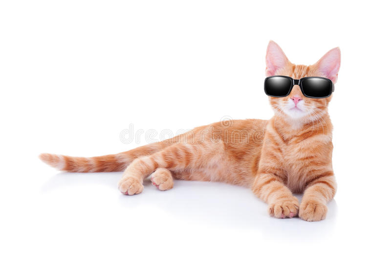 Summer Holiday Cat. Or cool party cat in sunglasses