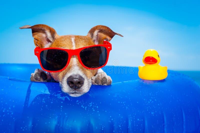 Summer Holiday Dog Stock Photo Image Of Shades Floating