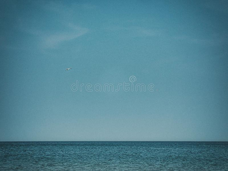 Summer holiday landscape with blue sea water and sky and a flying seagull on a warm day royalty free stock photo