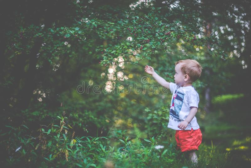 Child in forest picking berries stock photo