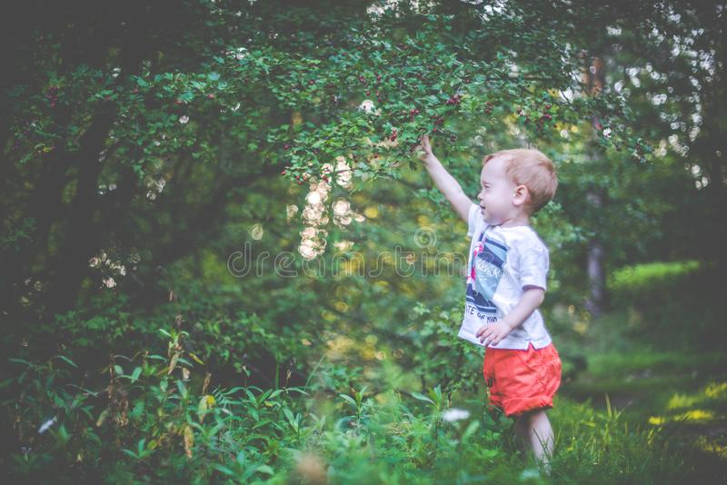 child in forest picking berries stock photography