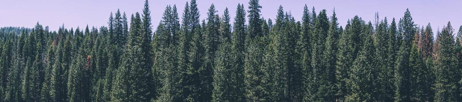 Summer holidays in the USA. Picturesque coniferous forests of the Yosemite Valley stock photos