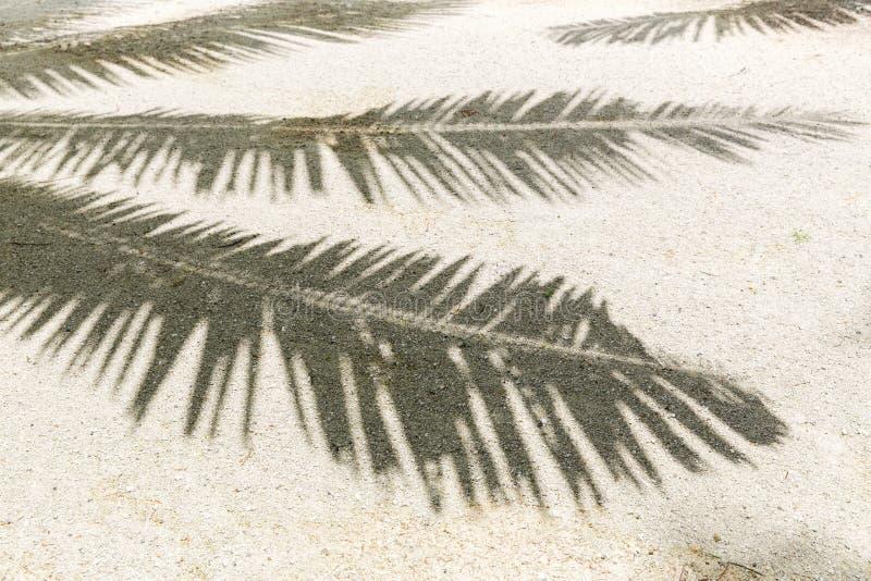 Palm tree shadow on sand of tropical beach stock photos