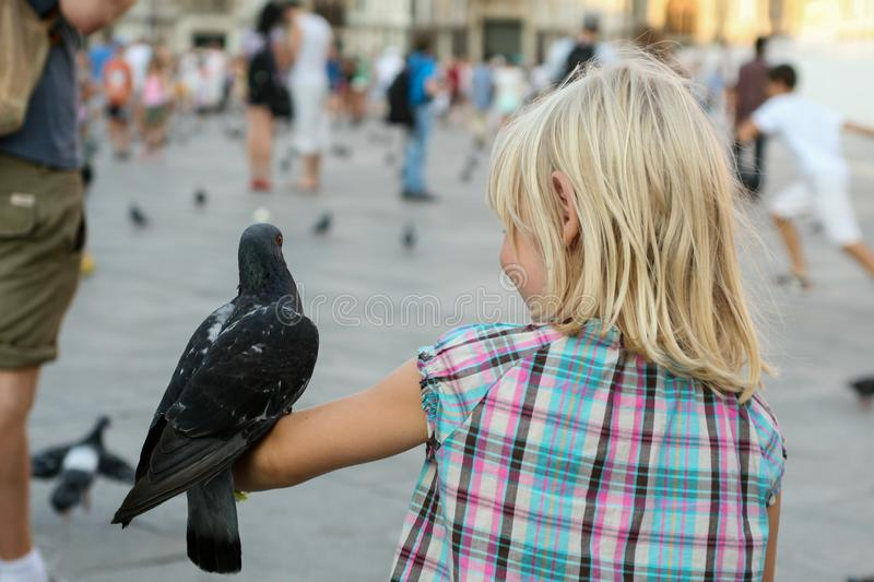 A dove sits on a child`s arm in a plaid shirt royalty free stock photo