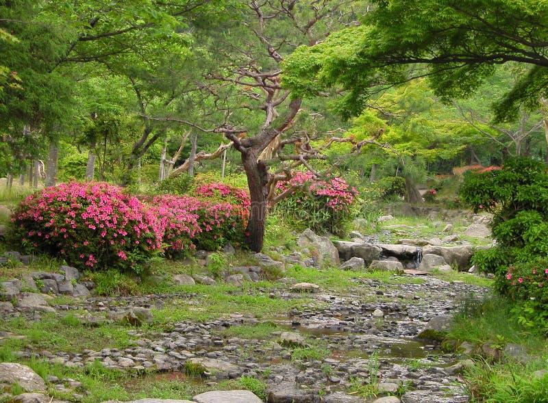 Summer Japanese garden royalty free stock photo