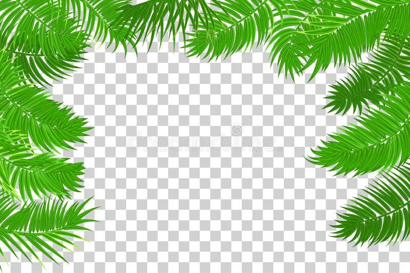 Summer jungle palm leaf frame royalty free stock photo