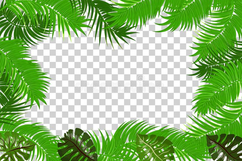 Summer Jungle Palm Leaf Frame Stock Vector Illustration