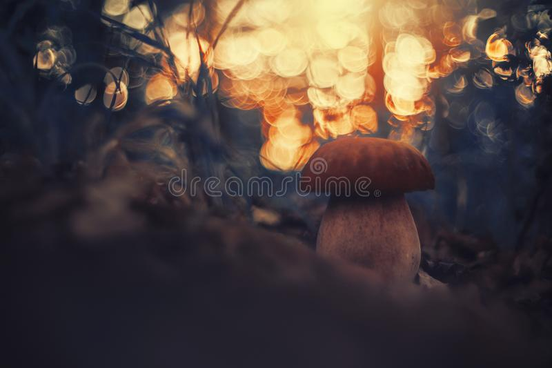 Summer King Bolete. Dreamy mood, blur, with unrealistic color palette, close up stock photography