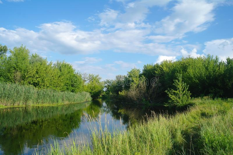 Summer lake near the forest with trees. Summer river near the forest with trees stock photo