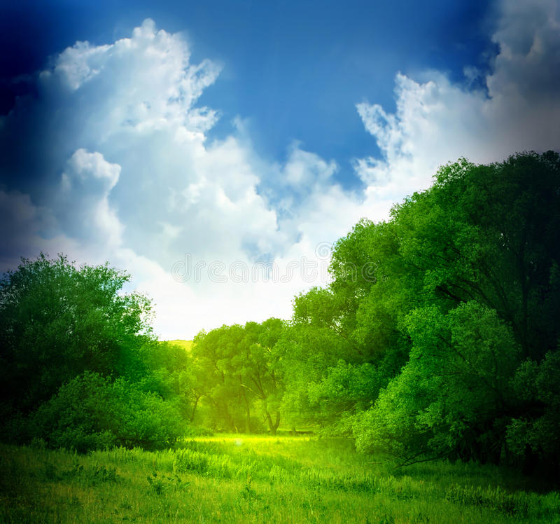 Download Summer landscape stock photo. Image of growth, background - 17903642